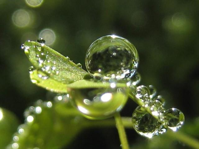 | صور رائعه على مقربه من قطرات المياه مناظر رائعه | 3460032694_b09824120f_z.jpg?zz=1