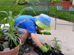 Dylan, planting again...
