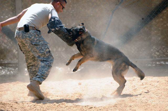 Military Working Dogs Training in Baghdad, Iraq