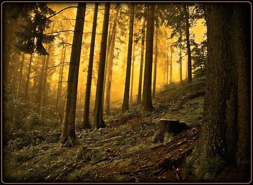 wood sun mist tree art nature fog forest sunrise germany creative dust oberberg moring platinumphoto topofthefog theunforgettablepictures platinumsuperstar artofimages bestcapturesaoi elitegalleryaoi
