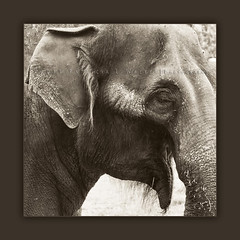 The Elephant I Met While Out Walking