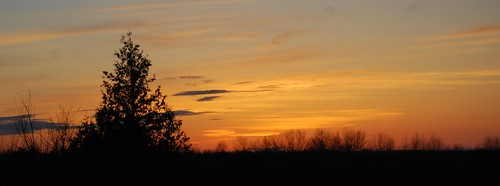 sunset ontario canada tree silhouette clouds