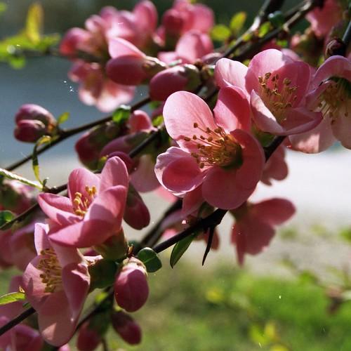 plants manualfocus mf nature olympus macro hungary flowers film müllerphoto drogerie pink tokina tokina50250 om omsystem scan filmscan olympusom10