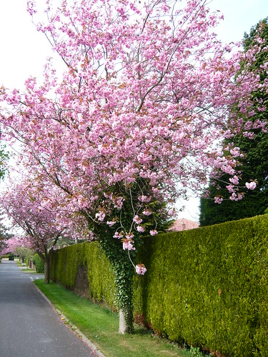 Top ten uk garden trees gardeners tips Small flowering trees