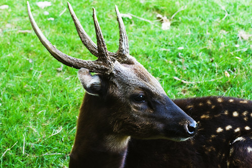 Animals World: famous pictures of animal Philippine deer ...