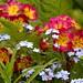 Spring flowers by September Songs