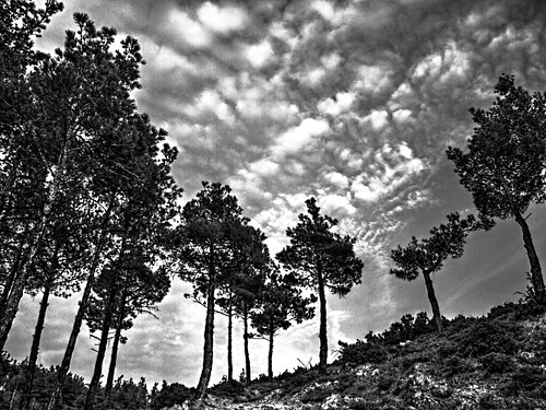 light sky blackandwhite bw panorama white mountain black tree nature grass clouds olympus greece thessaloniki hdr 43 dimitris fourthirds explored e520 olympuse520 chortiatis gimp26 dranidis dimitrisdranidis qtpfsgui19