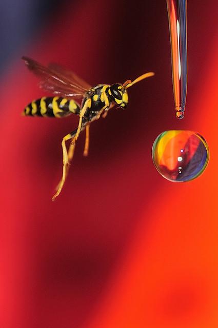 a wasp surprise!