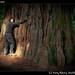 Treehugger Ivana