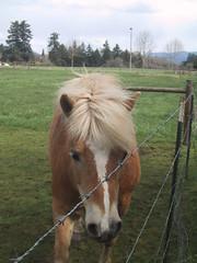 stallion(0.0), rein(0.0), halter(0.0), bridle(0.0), grazing(0.0), animal(1.0), mane(1.0), mare(1.0), pack animal(1.0), horse(1.0), mustang horse(1.0), pasture(1.0), pony(1.0),
