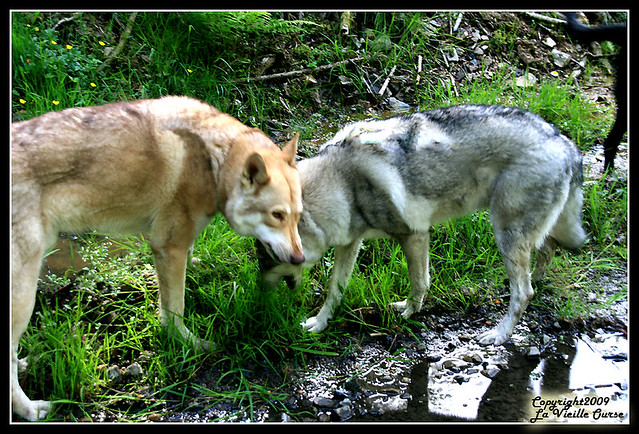 IMG_4871 herbivores - eating grass b   Flickr - Photo Sharing!