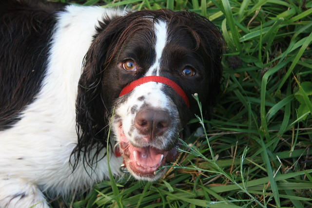 Image Result For Dog Nose