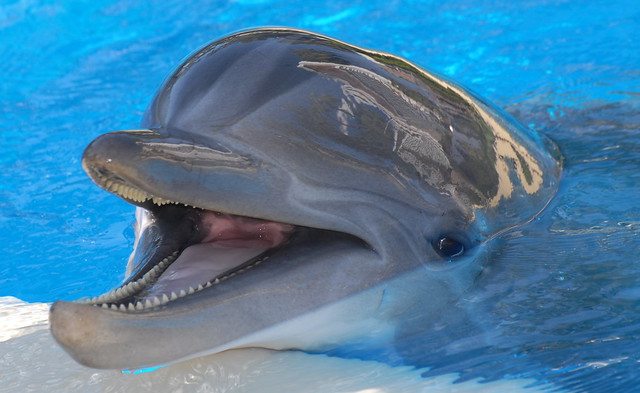 A very happy dolphin   Dolphin info