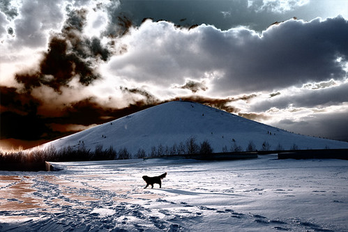 winter sunset dog snow goldenretriever golden twilight hokkaido retriever 北海道 soe goldens thelittledoglaughed flickrdiamond rubyphotographer goldenheartaward