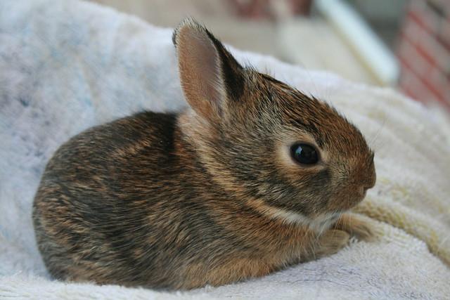 Wild Baby Rabbit | Well. Duke was barking at something one ...