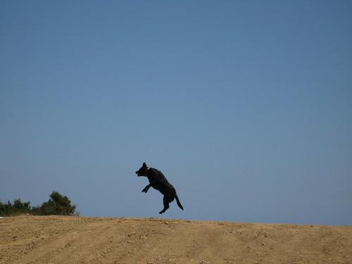 flying maisie
