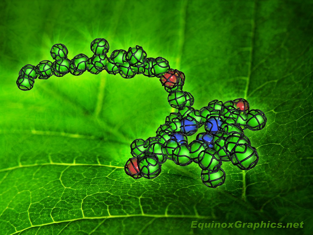 Image:Chlorophyll Molecule
