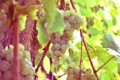 je veux boire des bateaux entiers de vin