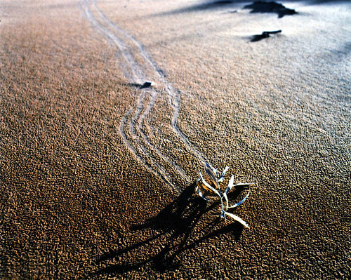 shadow mamiya sunrise utah photo kanecounty kanab sanddunes rb67 photoschmuck filmdaze coralpinks photobytroysnow