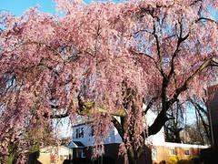flowering trees/bushes 09-15