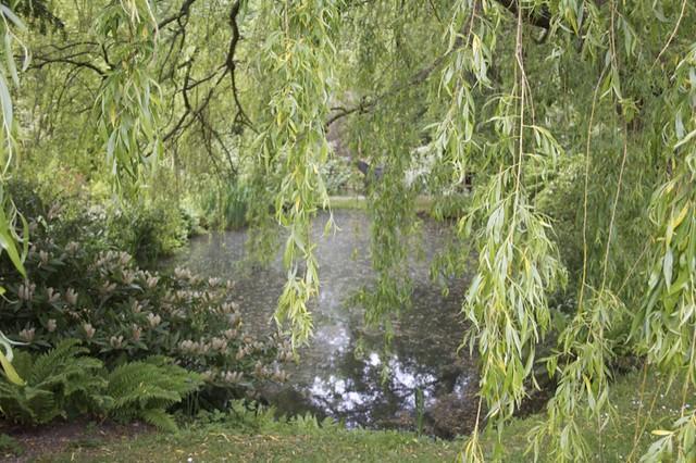 Fry pond