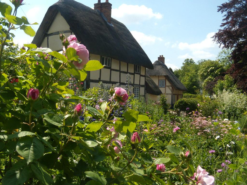 Roses, Blewbury Cholsey to Goring