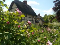 Roses, Blewbury