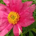 Georgeson Botanical Garden-22