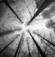 breath of tree