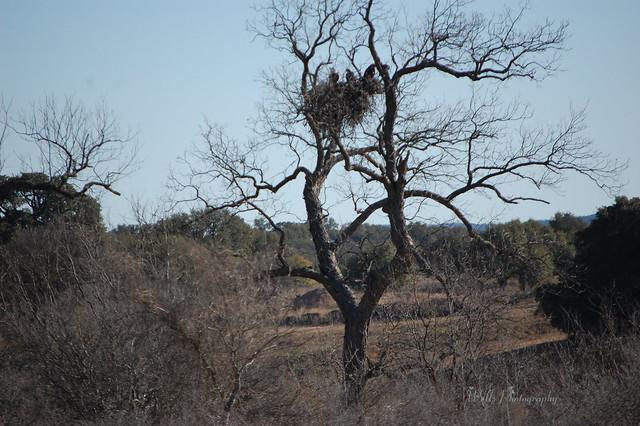 Eagles Nest, Llano, Texas