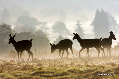 Deers in Richmond Park London, UK