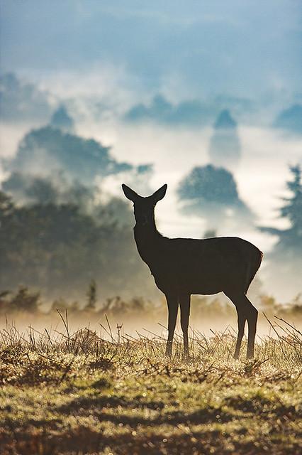 Deer in Richmond Park London, UK
