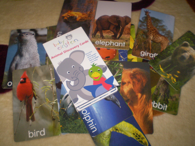 animal discovery cardsbaby einstein flickr photo sharing