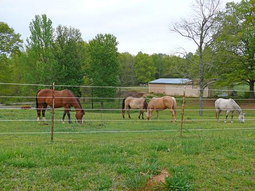 horses horse alabama pasture fz50 panasoniclumix limestonecounty bkhagar