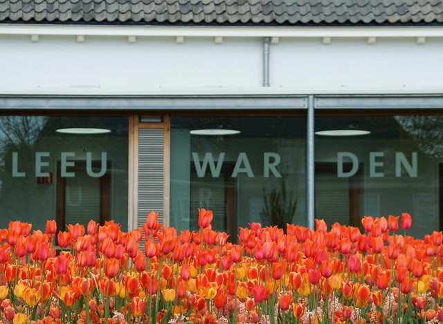 Tulips from Leeuwarden