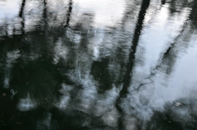 Sombras en el agua