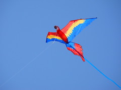 extreme sport(0.0), toy(0.0), individual sports(1.0), wing(1.0), sports(1.0), windsports(1.0), kite(1.0), blue(1.0), sport kite(1.0),