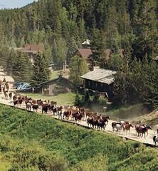 C Lazy U Ranch