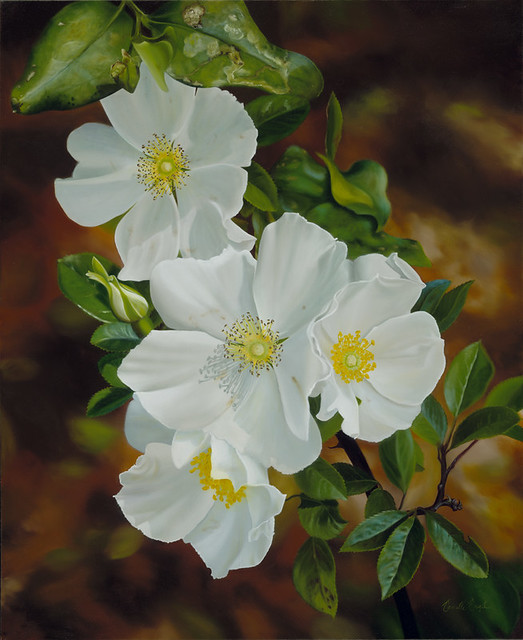 Cherokee Rose Rosa Laevigata Oil Painting By Camille