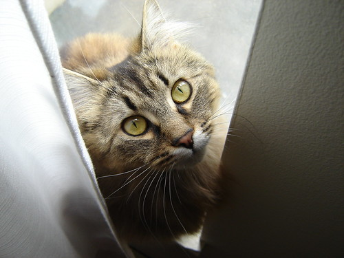 Abbie in the Window