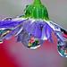 Chihuli blown glass chandelier by Steve took it