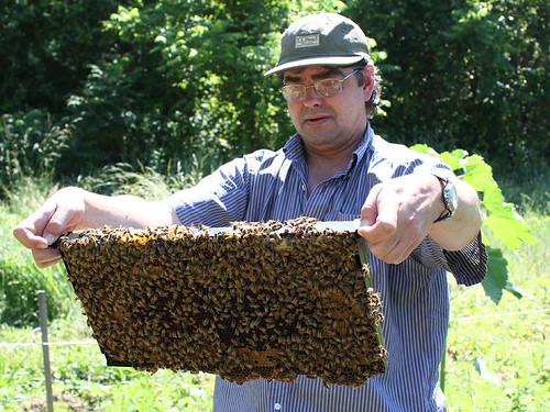 39 Beekeeping Equipments And Their Uses Beekeeping Collectables 39 39 Beekeeping Duluth Ga Laws 39