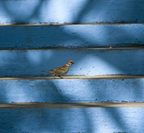 a little bird walking