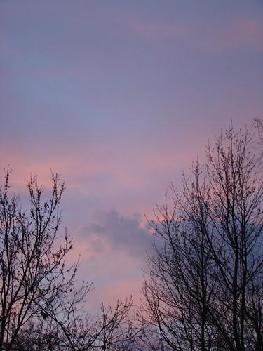 pink blue trees sky sunrise purple columbiasc march2009