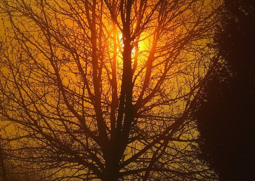 county tree fog howard maryland estremità vanagram