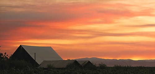 california pink light sunset cloud sun sunlight foothills yellow clouds gold vineyard vines day sundown hills vineyards end streaks