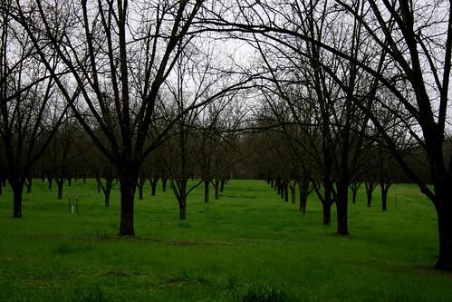 winter green landscape theme wintergreen