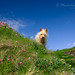 Juni :: Dog image, county kerry, ireland