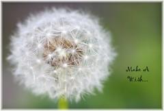 ~ Make A Wish ~