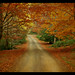 Follow me into the  Autumn Forest by Sim.B